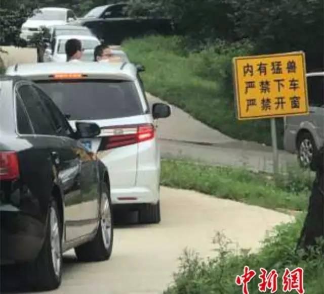 八达岭野生动物园又有游客开车窗喂熊被袭……网友:该