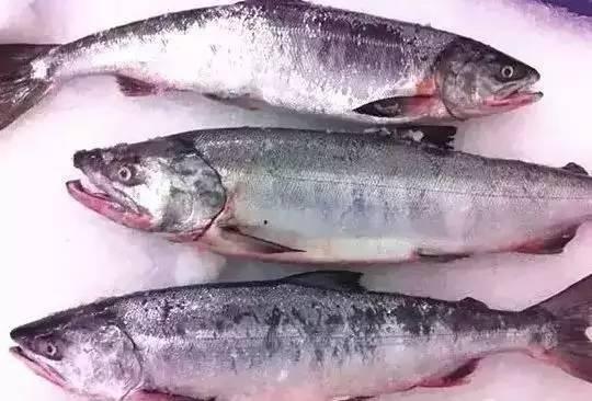 【三文鱼】挑选的基本知识以及几款三文鱼菜谱制作!