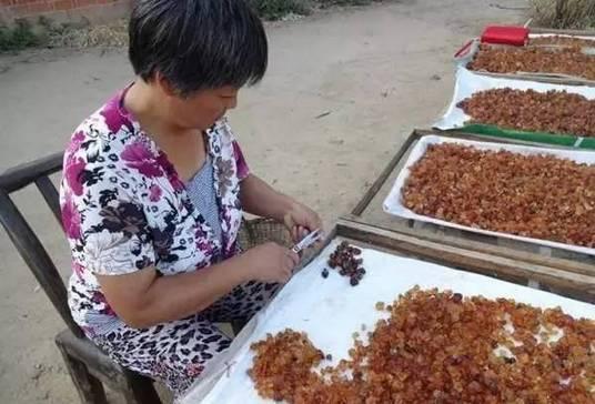"""农村常见的桃胶居然如此珍贵,而城里人称它是""""桃树上的燕窝"""""""