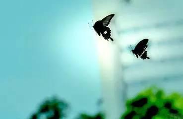 平湖秋月,二泉映月小提琴曲:梁祝,千年的铁树开了花萨克斯曲:茉莉花
