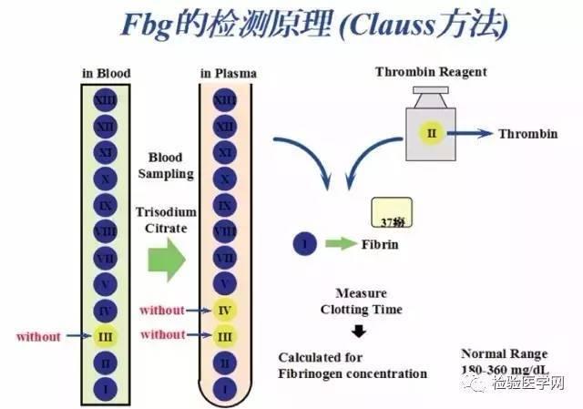 血液凝固的原理_图为血液凝固机理