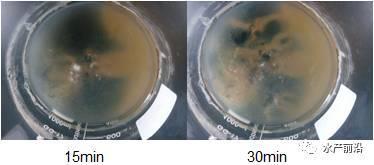 过硫酸氢钾检测方法_过硫酸氢钾真假_过硫酸氢钾质量的鉴别