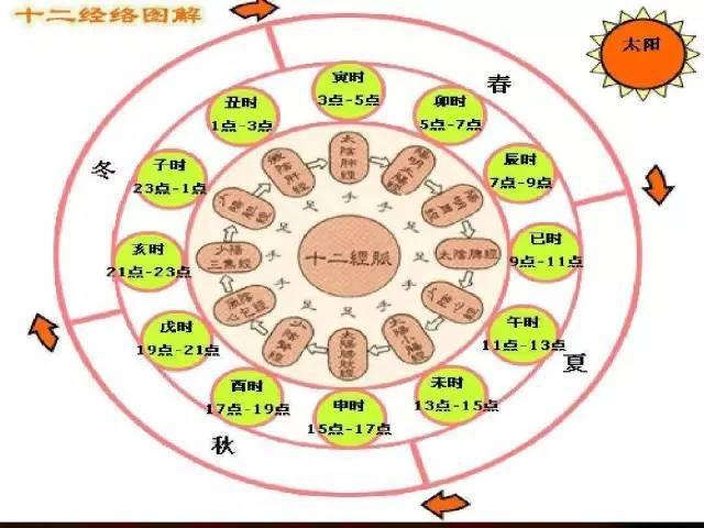 人体生理时间表_人体并没有排毒时间表,无须刻意按时