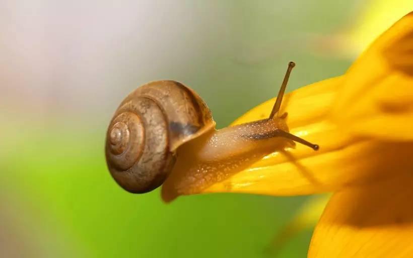 达照法师 蜗牛的家