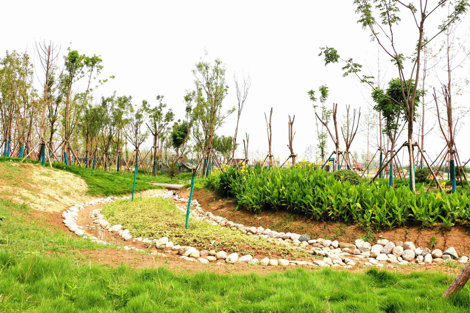 清华大学雨水花园-郑州园博园外围风景独家照片曝光,原来这么有看头图片