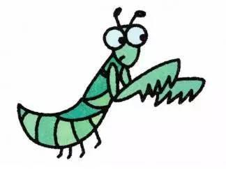 简笔画螳螂步骤 彩色螳螂简笔画法 昆虫简笔画 绘画