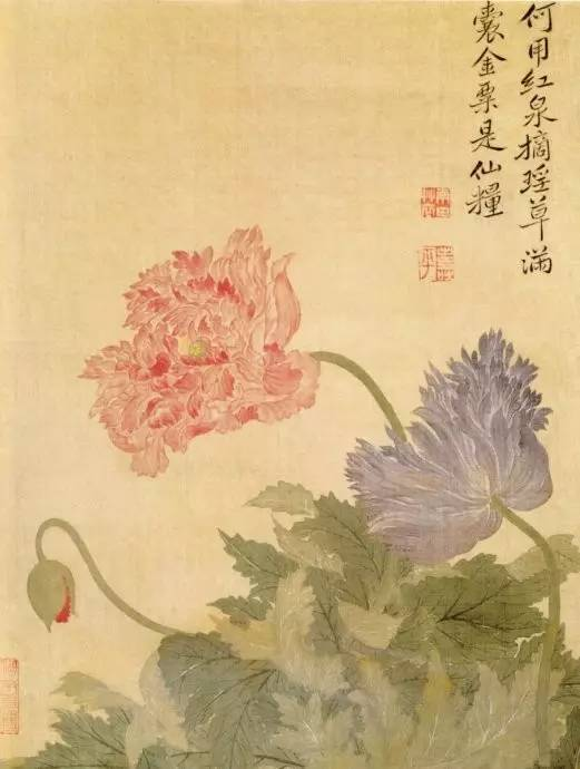 恽寿平丨花鸟