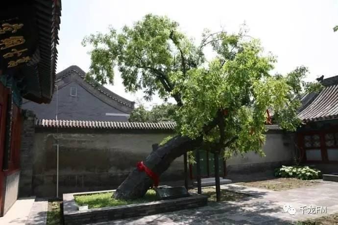 北京拟出台新规:野生动物园自驾专道不能接触猛兽