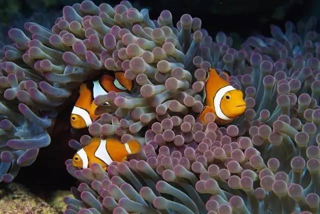 壁纸 动物 海底 海底世界 海洋馆 水族馆 鱼 鱼类 640_428
