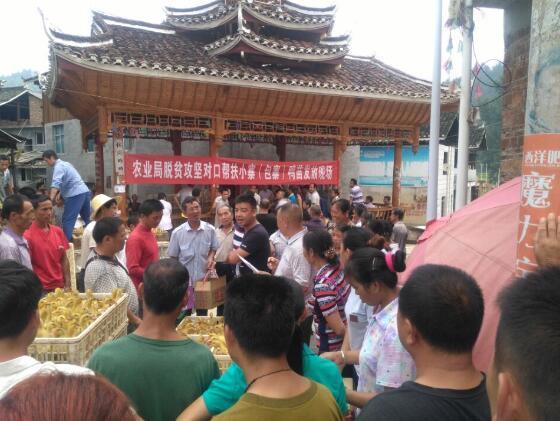 """黎平县农业局对口帮扶洪州向贫困户发放""""扶贫鸭""""助脱贫"""