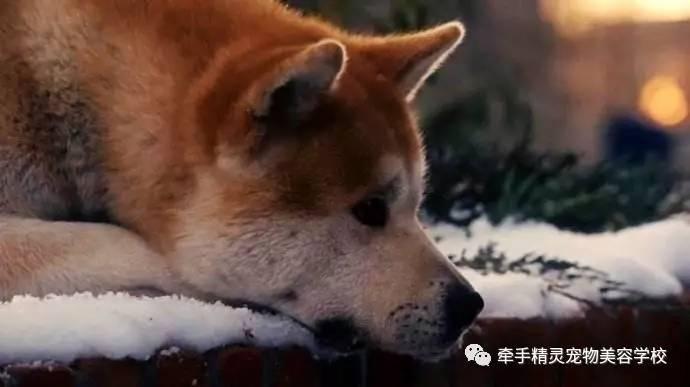 电影 最大 宠物/《忠犬八公的故事》剧照