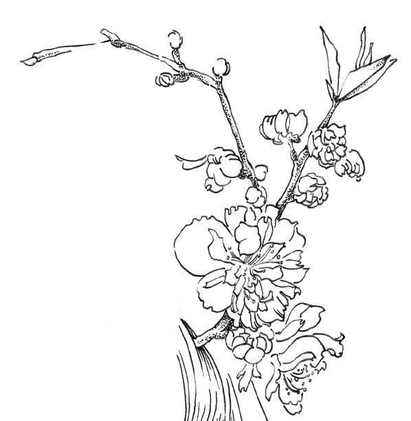 桃花图片手绘 黑白