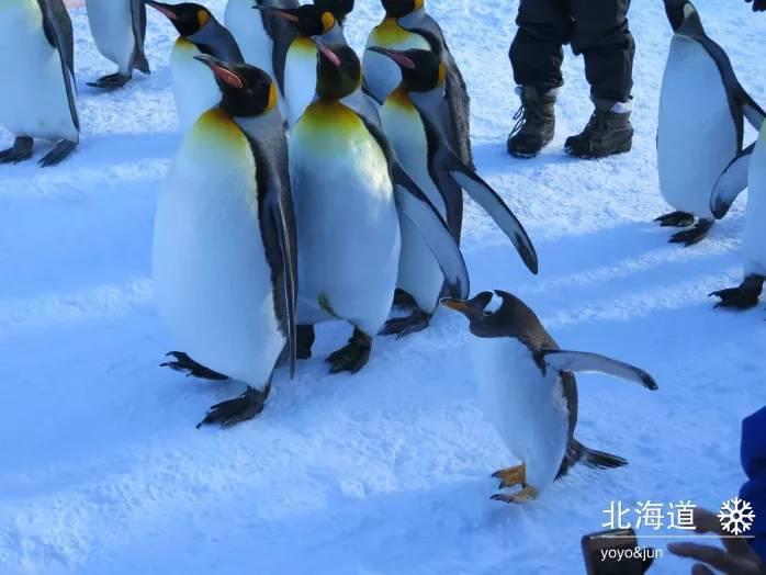 南非,北海道,济洲岛,企鹅及其它小动物们