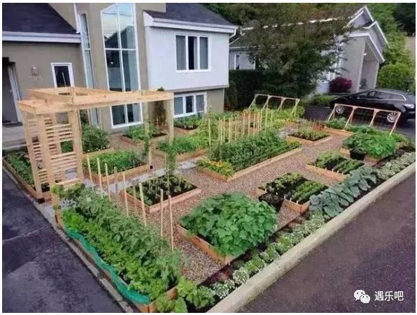 别人在家种出菜园了,比花园还漂亮 ~~~_突袭时尚_突袭图片
