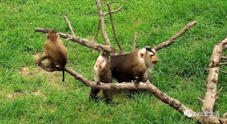 旅游| 西霞口野生动物园,石岛赤山2日游!9月1日走起!