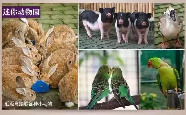 迷你动物园里呆萌逗趣的小动物