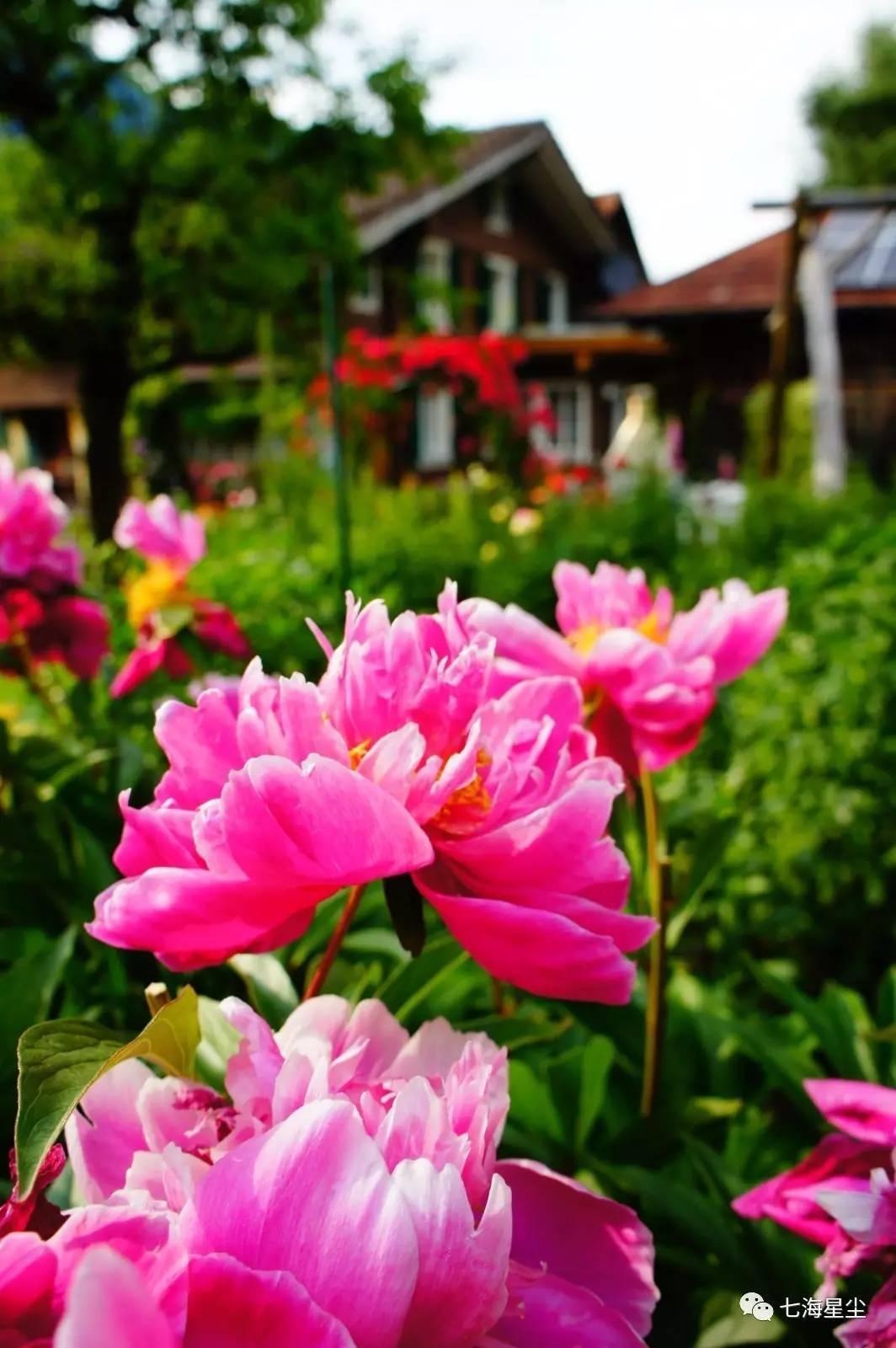 Rose【上帝是如此偏心,把所有的美丽都留给了这些地方】 - Rose - Rose Yang的博客
