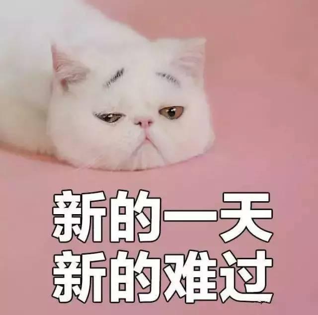 这只八字眉猫咪自带忧愁气息,给它的大头照配上文字后,就成一波表情包