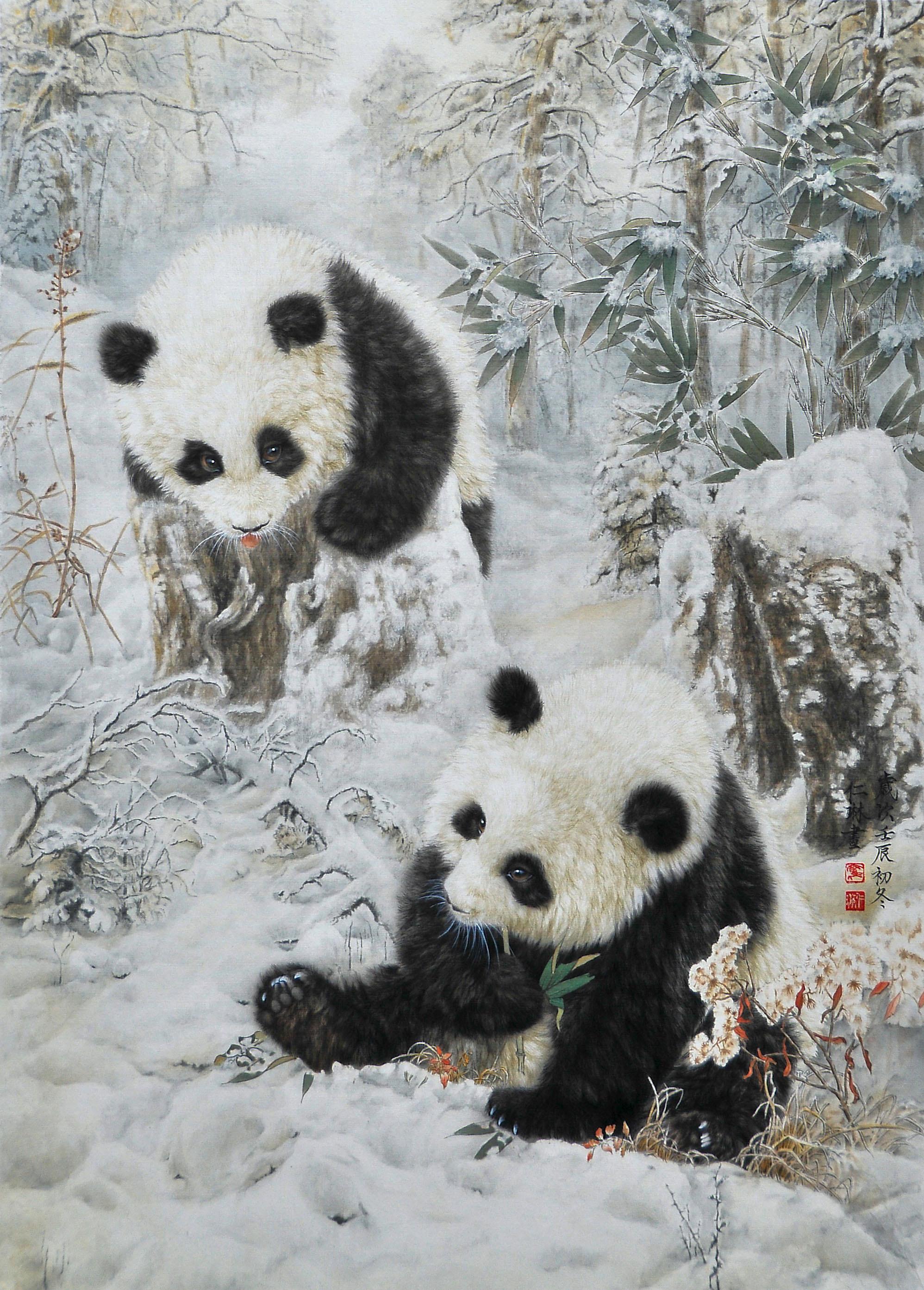"""多次千公里联赛获奖""""西翁系""""图-中国信鸽信息网 www.chinax..."""
