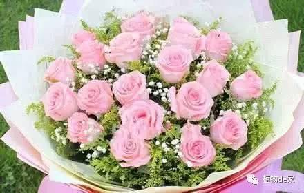 七夕可以送粉玫瑰吗 11朵粉玫瑰的花语是什么