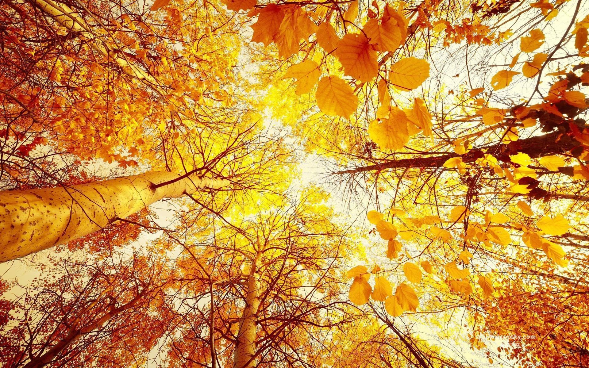 秋天早晨的景色照片