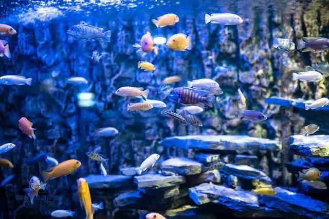 废物利用手工制作大全海底世界