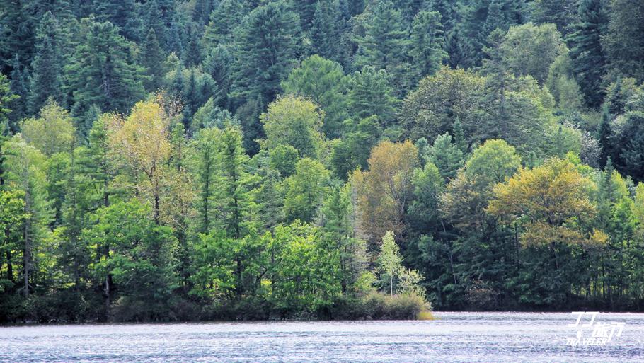 我想问:心中那片森林何时能让我停留