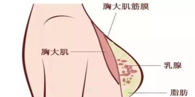 胸大的原理_俊美人台 小董 胸省的十大秘密
