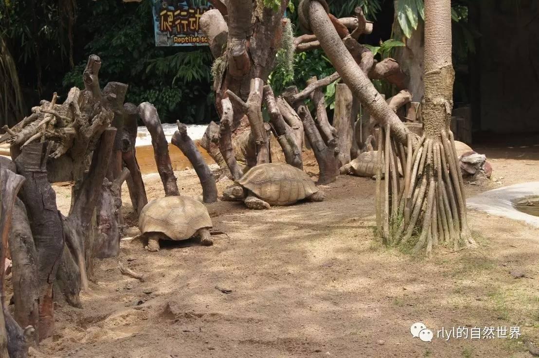 【广州长隆野生动物园】游记!