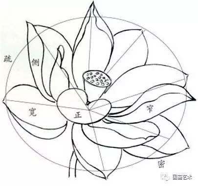 图文教程:工笔荷花花冠的各种画法图片