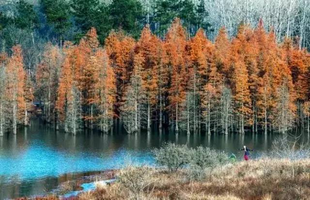 南京有个免费郊游胜地,一到秋天就清艳惊人,看一眼就想马上出发!