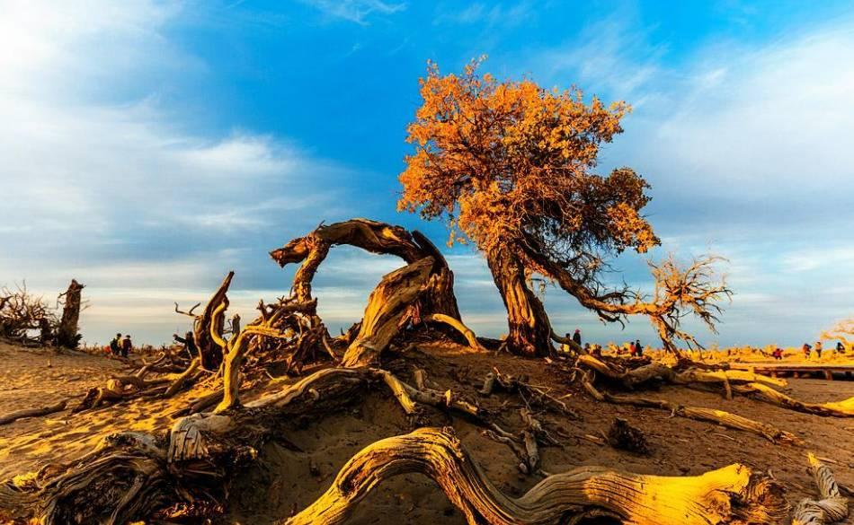 怪树林位于达来呼布镇东南20公里处的荒漠中,这里曾是一片茂密的胡杨
