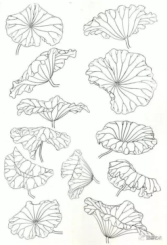 图文教程 工笔荷叶的各种画法