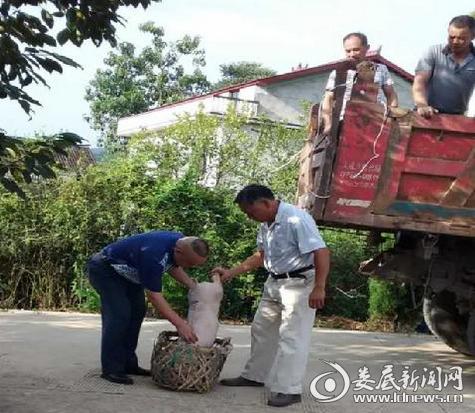 娄星区安监局积极助推水洞底镇新禾村贫困户种养脱贫