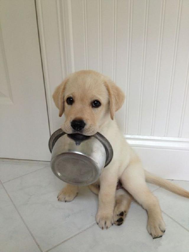 家里撸_喊一声开饭,家里的狗就自己叼着碗过来了,你家汪会吗?