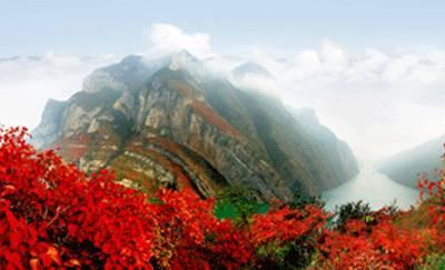 【奔走相告】巫山第十一届国际红叶节将于11月17日举行图片