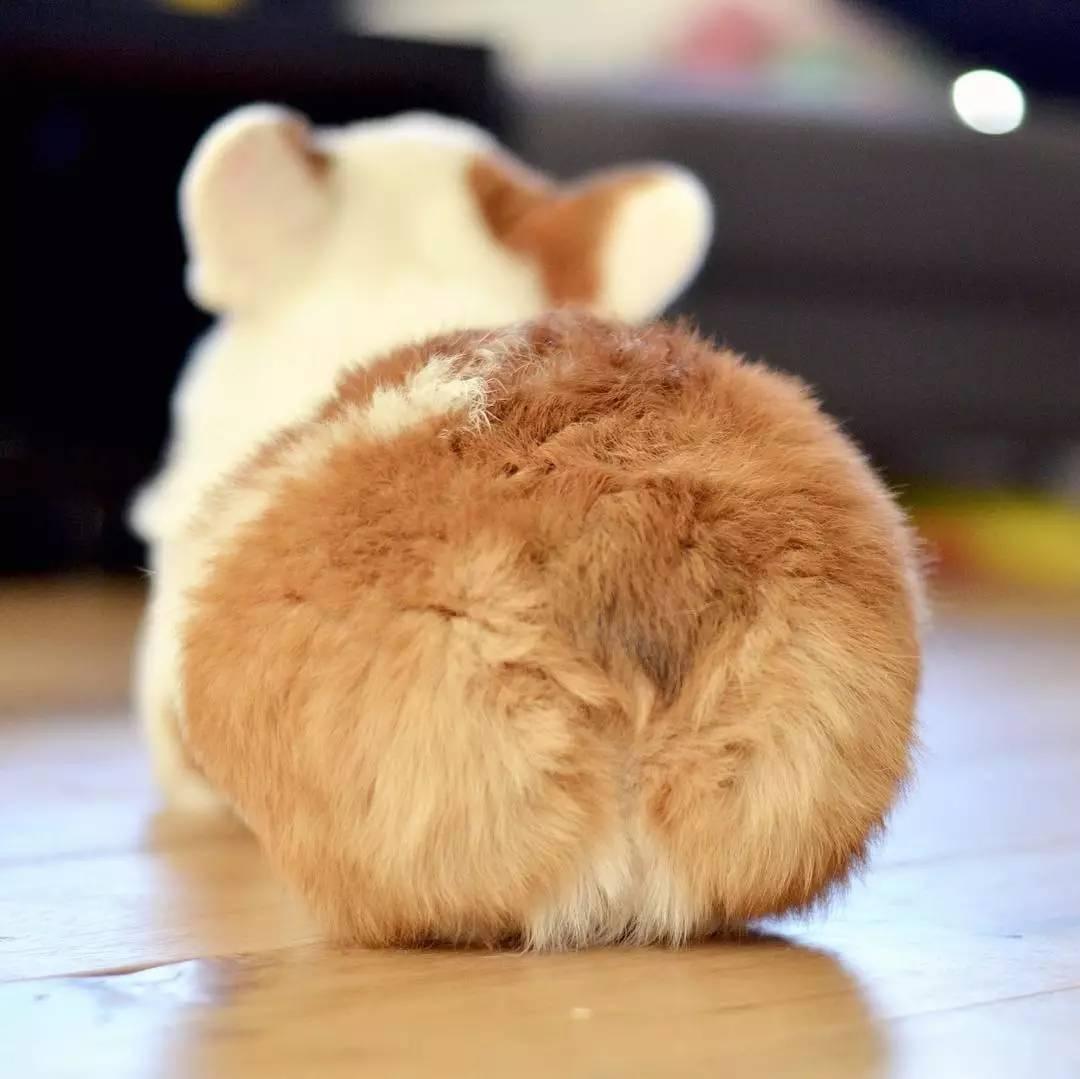 鲍鱼壁纸动物1080_1079兔子蝴蝶3op图片