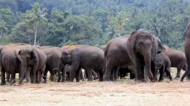 落地签说走就走,斯里兰卡9大体验,教你一岛玩遍东南亚