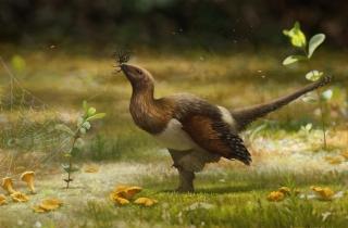中国境内发现新恐龙物种,有翅膀却不会飞