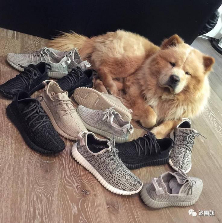 拴狗绳子固)��i)�aj_—— aj 12 —— 要说球鞋 在狗圈中,它可是无人能敌 是狗狗中当之无