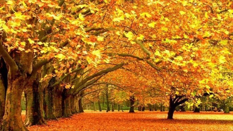教给孩子,当孩子看到秋天的落叶时也能够吟诗一首.图片