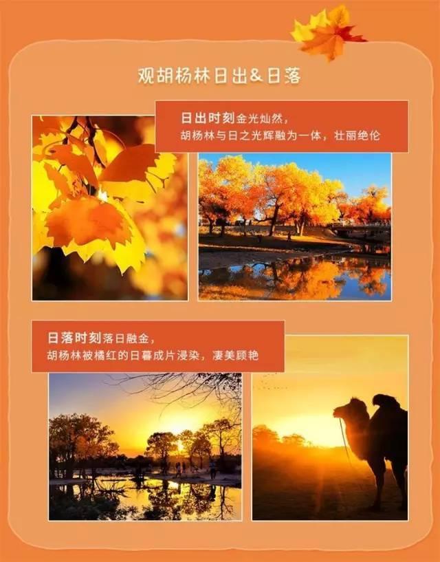 额济纳,中国最美的秋色。