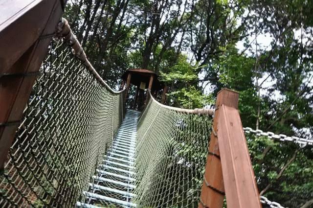 眉山、乐山的游客朋友免费畅游蒙顶山啦!