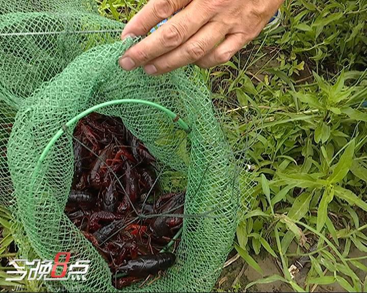 """龙虾排行榜_这个""""五一"""",小龙虾上了美食排行榜第一,武汉热干面跟着火了"""