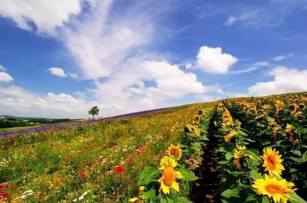 北海道,四季是如此静美,一定要去一次的地方!