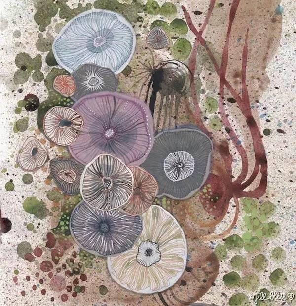 她费尽半生积蓄隐居海岛,只为拍最美的植物,画最天真的画