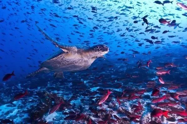 6000只无翅的鲨鱼,疼的不只是加拉帕戈斯