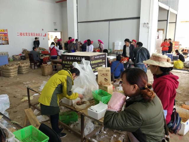 香格里拉松茸上市潮,游客也可以吃到生鲜松茸