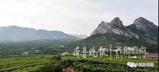 旅游 正文  日前,平度大泽山风景名胜区总体规划日前编制完成并公示