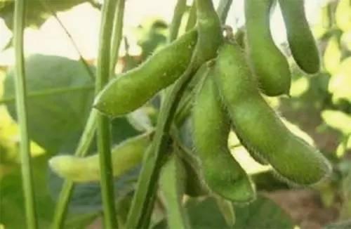 高家庄绿色蔬果熟了,快来采摘吧~